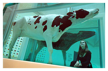 cow Mother and Child Divided Damien Hirst